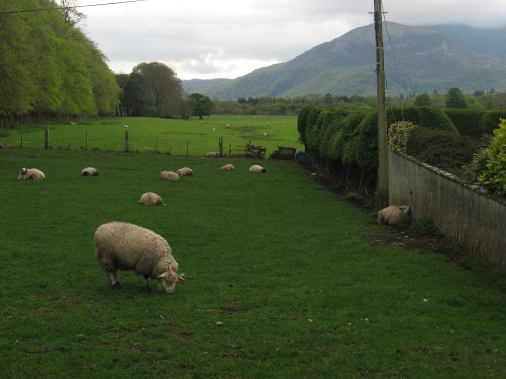 Paisaje rural irlandés