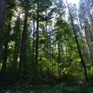 Los bosques rumanos en las inmediaciones del Castillo de Bran