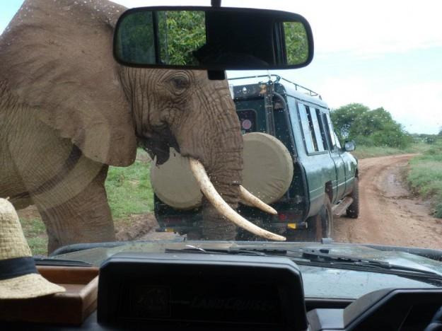 Daniel perseguido por elefantes en África