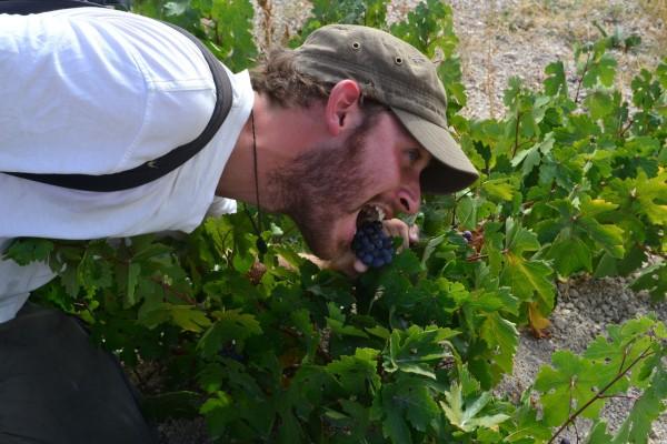 Comiendo uvas salvajes que crecen en los valles de Cappadocia