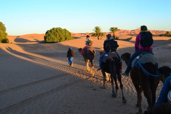 Los guías bereberes encabezan los convoyes de dromedarios por el Sahara
