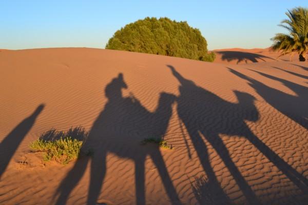 Las sombras de los dromedarios formando una típica postal del desierto