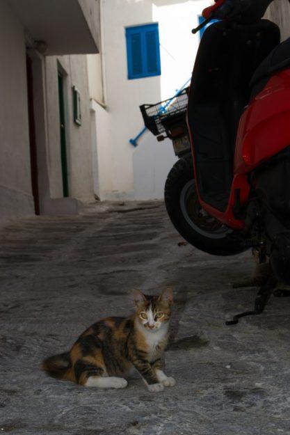 Mykonos Town, un pueblo plagado de gatos