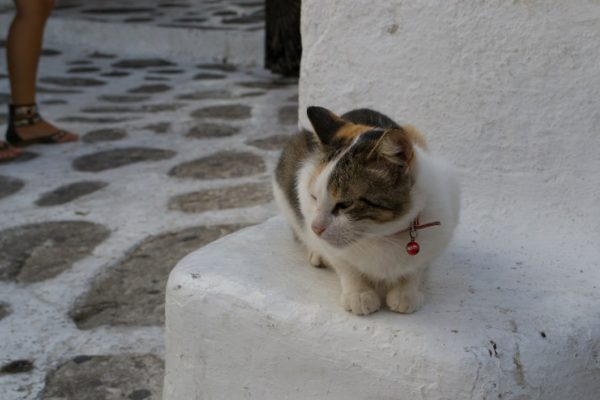 ¡Otro gato!